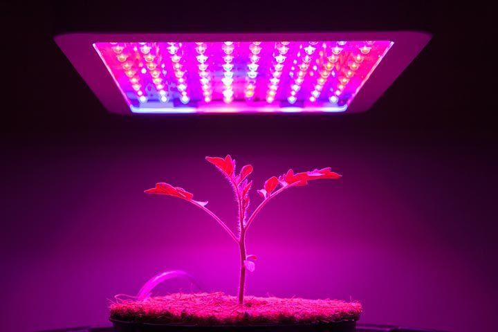 Vor- und Nachteile von LED Growlampen